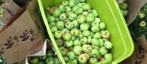 funky fruit initative
