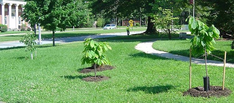 Register a Tree